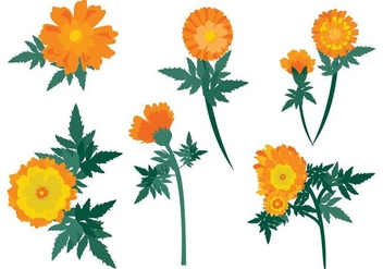 Free Calendula Flowers Vector - Free vector #410345