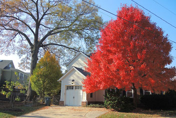 USA (Washington DC) Beauty of red leaves - бесплатный image #410885