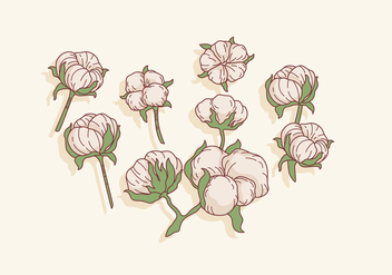 Cotton Flowers Vector - vector gratuit #412885