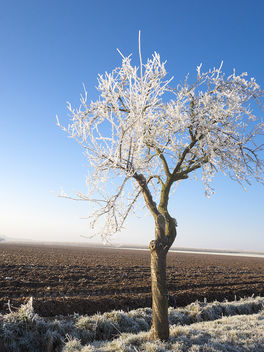Frost Tree - Free image #413055