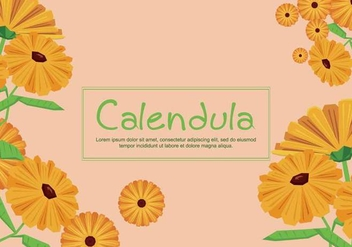 Free Calendula Illustration - Free vector #413905