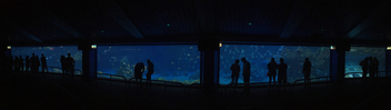 Aquarium Panoramic - Free image #415315