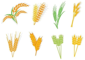 Free Different Type Oats Vector - Free vector #416055