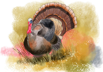 Wild Turkey Bird - vector gratuit #417945