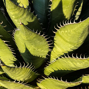 Nature's Patterns - image #423945 gratis