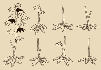 Hand Drawn Cassava Tree Free Vector - vector gratuit #424745