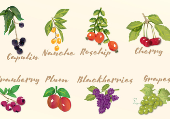 Watercolor Fruits - Free vector #425035
