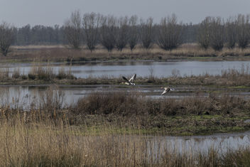 Unexpected - Tongplaat, Biesbosch - image gratuit #425535