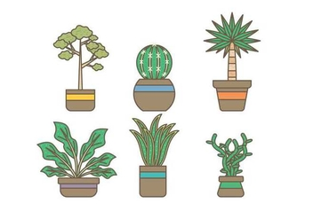 Free Evergreen Houseplant Vectors - vector gratuit #427075