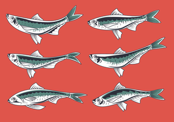 Fresh Sardine Hand Drawn Style Vectors - бесплатный vector #428605