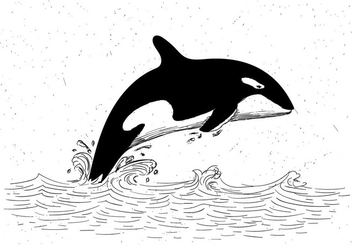 Free Vector Hand Drawn Killer Whale Illustration - Free vector #429465
