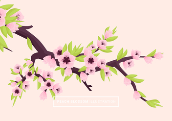 Peach Blossom Vector Illustration - vector gratuit #430575