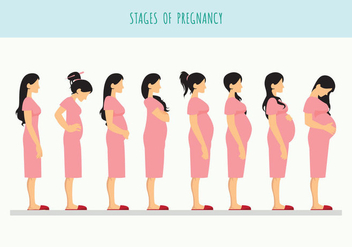 Pregnant Beautiful Woman Vector - vector #430655 gratis