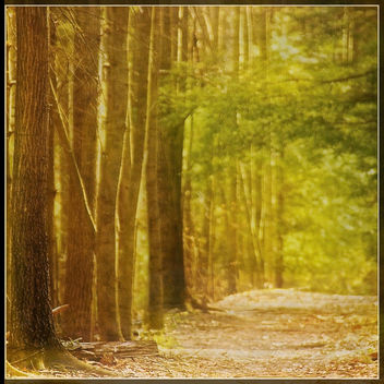 A Walk In The Woods - Free image #432945