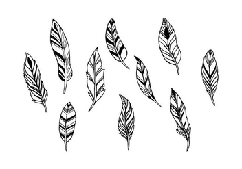 Free Feathers Vector - Kostenloses vector #433055