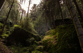 in the forest XXIV (Elbe Sandstone Mountains) - Kostenloses image #433125