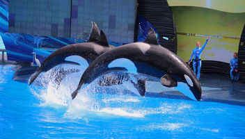 Flying Orcas - image #434475 gratis