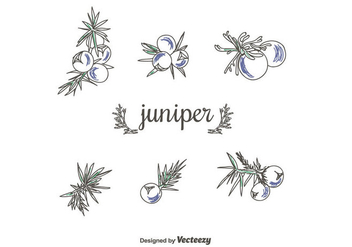 Hand Drawn juniper Vector Set - бесплатный vector #434935