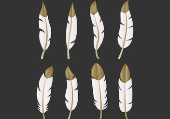Set Of Pluma Vectors - vector gratuit #435125