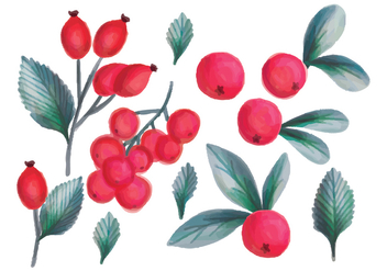Vector Hand Drawn Forrest Fruits - Free vector #436605