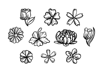 Free Flowers Hand Drawn Vector - vector gratuit #436615