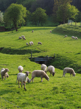 a sheep scenery - image gratuit #437585