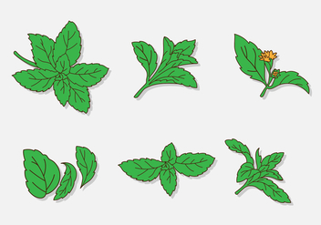 Cartoon Green Stevia Leaf - Free vector #437905