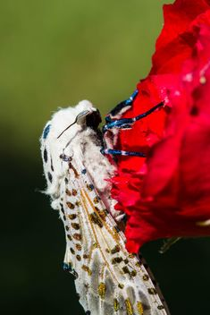 moth on red rose - image #438995 gratis