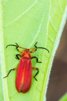 Red bug on green leaf - image #439065 gratis