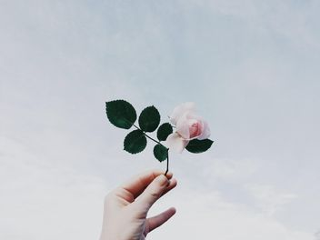 Rose in the hand against the sky - image gratuit #439265