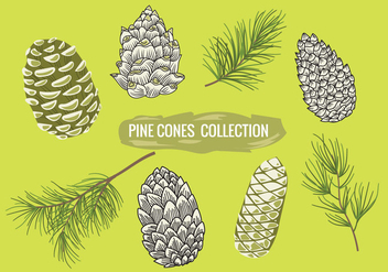 Pine Branch with Pine Cones Set Collection - vector gratuit #441965