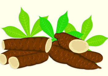 Vector Illustration Of Cassava - vector gratuit #444685