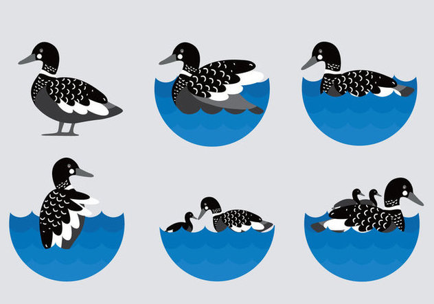 Black Loon Illustration Flat Vector - Free vector #444975