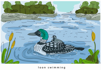 Loon Swimming In Lake Hand Drawn Vector Background Illustration - Kostenloses vector #445025