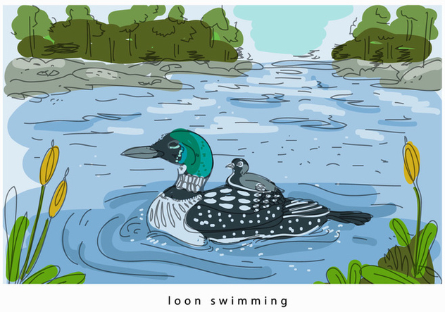 Loon Swimming In Lake Hand Drawn Vector Background Illustration - Free vector #445025