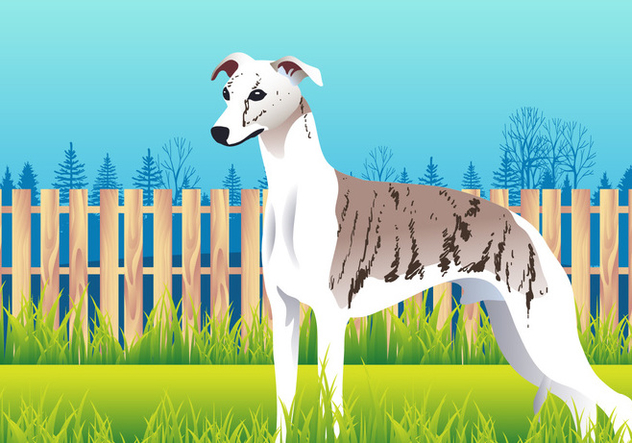 Cute Whippet Dog Breed Vector - vector gratuit #445925