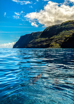 Dolphins on the Na Pali Coast - бесплатный image #446175