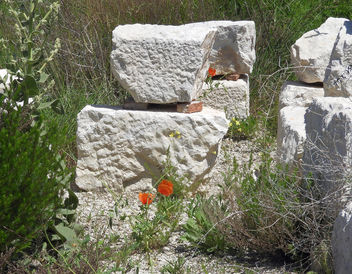 Turkey (Burdur-Sagalassos) Wild flowers grown on antique stones - image gratuit #446225