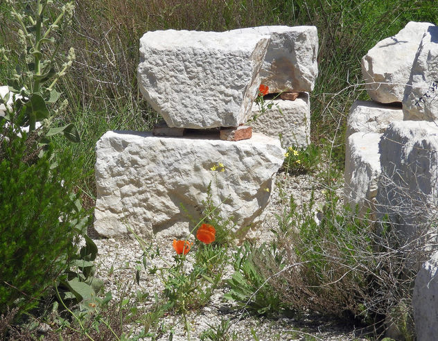 Turkey (Burdur-Sagalassos) Wild flowers grown on antique stones - бесплатный image #446225