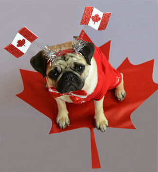 Happy Canada Day! - Free image #446695