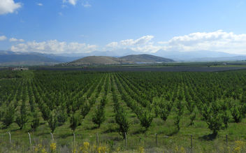 Turkey (Isparta) Apple trees - Free image #446765