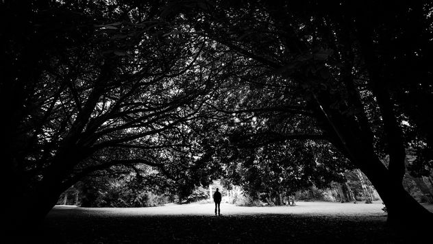 The man and the trees - Cong, Ireland - Black and white photography - Free image #447045