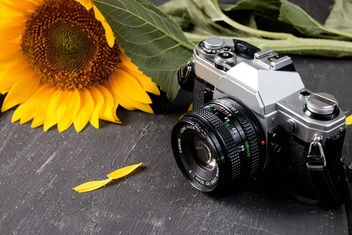 Retro camera and a sunflower - image gratuit #447235