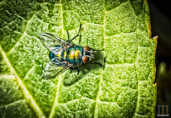 Fancy Little Fly - image gratuit #448685
