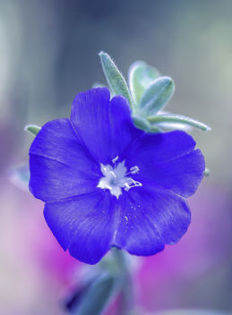 Tiny Blue Flower - image #448855 gratis