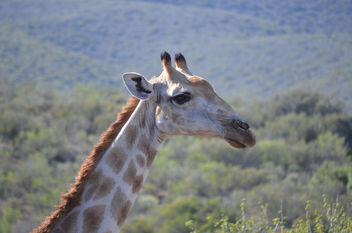 Safari Game Drive - Free image #449075
