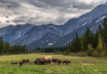 My Canadian Rocky Mountain High - Buffalo Ranch - Kostenloses image #449195