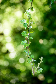 Refreshing Green - image gratuit #449265