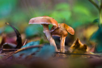 Mushroom in the woods - image #449285 gratis