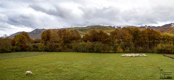 Sheeps under a storm sky - image #449955 gratis
